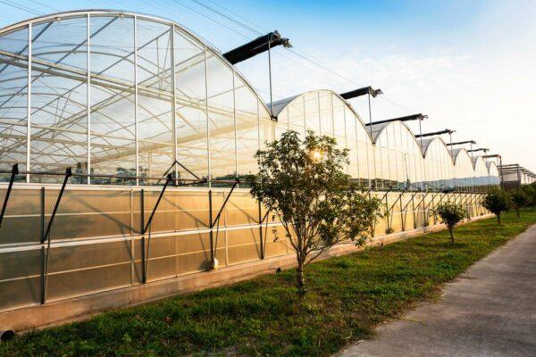 centre-greenhouse-1200