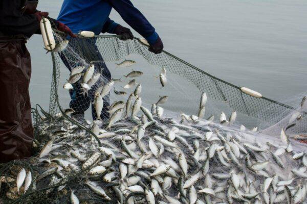 fish-in-net-1200