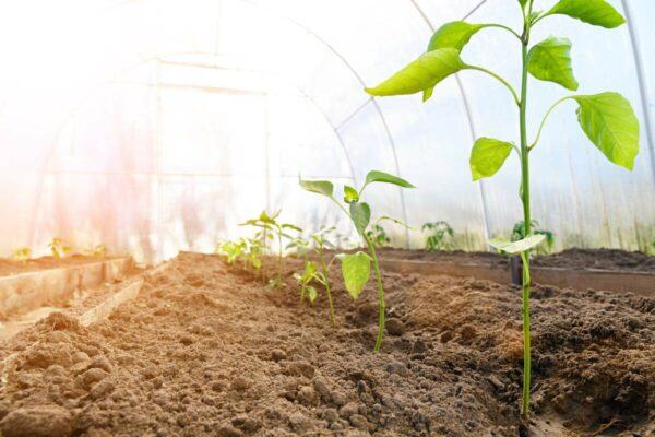 growing-plants-1200